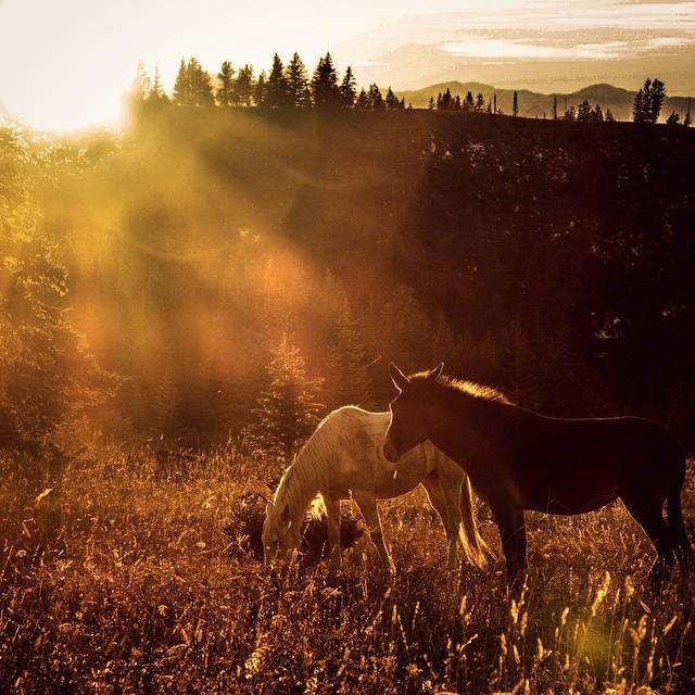 del-sol-grazing